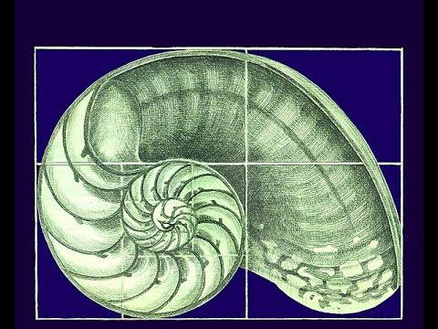 Konkrete Kunst - Bedeutung von Mathematik, Geometrie und Proportionen für Ästhetik und künstlerisches Schaffen Kunststile antike