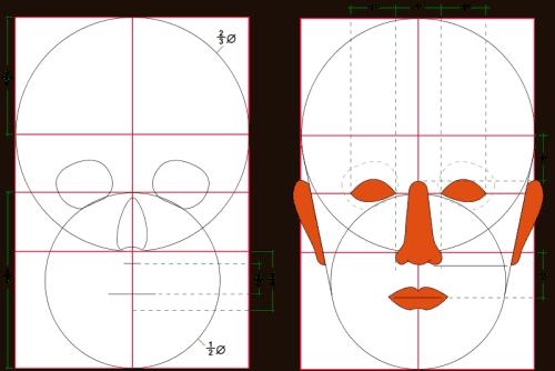 Proportionen des menschlichen Kopfes