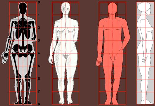 Proportionen des menschlichen Körpers