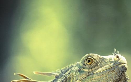 Will Jenkins, dem diese Aufnahme eines Iguana in Costa Rica gelang. In der Gruppe der 11-14-Jährigen gehörte er mit diesem Bild zu den Finalisten