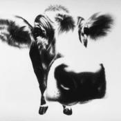 """Kohlezeichnung """"Curious Cow"""" von Ira van der Merwe"""
