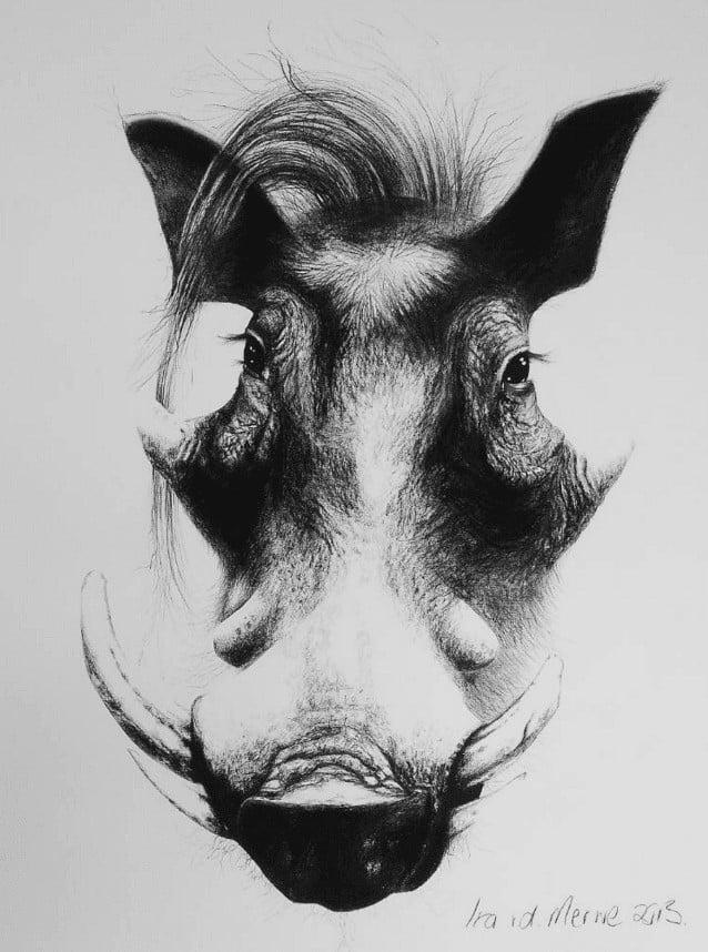 """Kohlezeichnung """"Vlakvark"""" von Ira van der Merwe"""