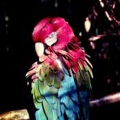 Der freifliegende Papagei