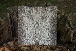 Mystisch-abstrakter Falter