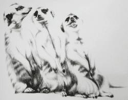 """Kohlezeichnung """"The Three Meerkats (2. Studie)"""" von Ira van der Merwe"""