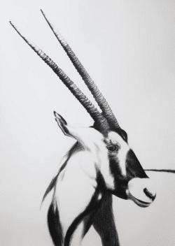 """Kohlezeichnung """"Gemsbok"""" von Ira van der Merwe"""