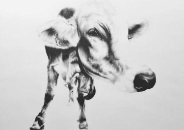 """Kohlezeichnung """"Schweizer Kuh III"""" von Ira van der Merwe"""
